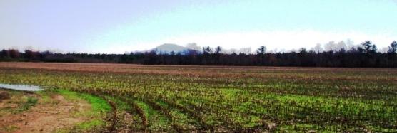 FarmsFarmland